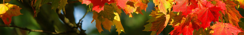 cropped-autumn-209479_1920-1.jpg