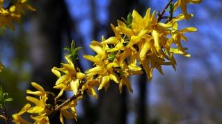 spring-105633_1920